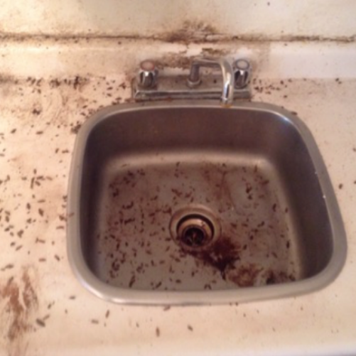Cockroaches in the kitchen sink